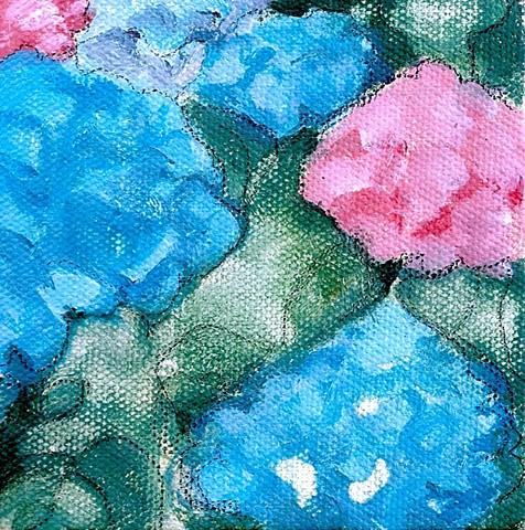 July 10 Hydrangeas are in bloom!