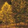 Backlit Aspen Grove