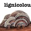 Lignicolous