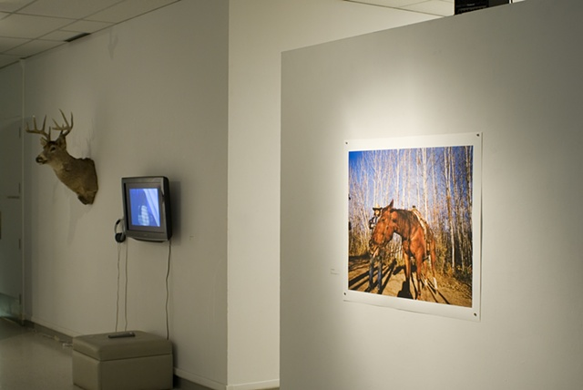 Power Animal Party Video NCN Installation