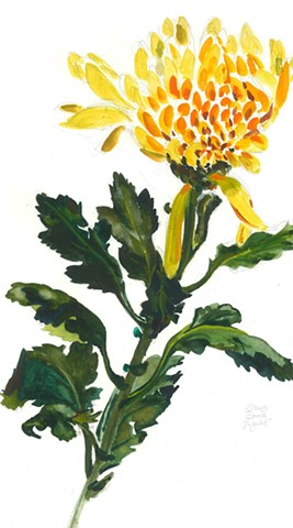 Watercolor Painting by Qing Song, Chrysanthemum, Flower