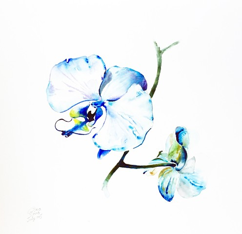 Watercolor Painting by Qing Song, Orchid