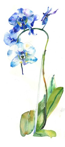 Watercolor Painting by Qing Song, Orchids
