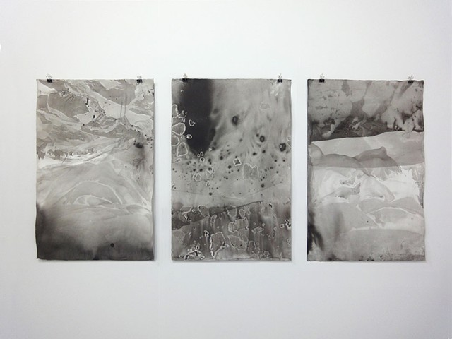 Sumi studies, installation view