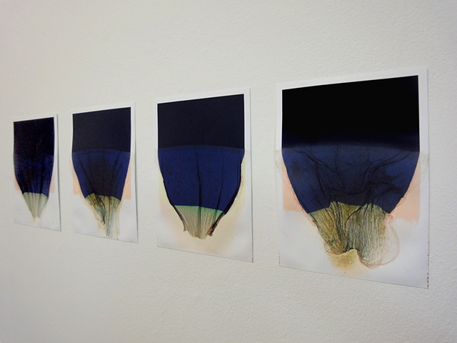 Untitled (Release 1 series), installation view)