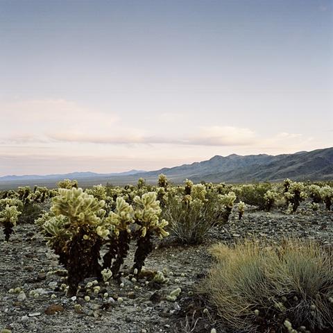 Joshua Tree desert landscape archival pigment print photograph by Chris Danes