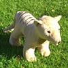 Tassie Tiger Mascot