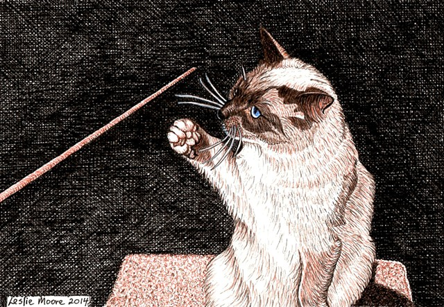 a colored pen and ink drawing of a Siamese cat by Leslie Moore of PenPets