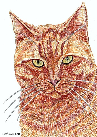 A colored pen and ink drawing of a marmalade tiger-striped cat.