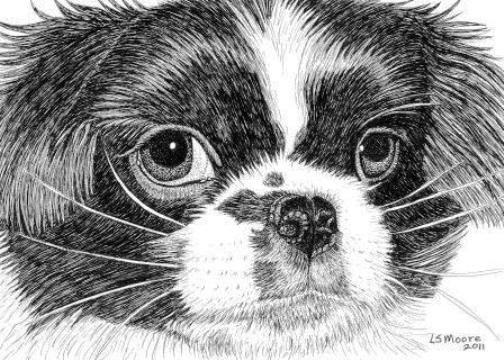 A pen and ink drawing of a Japanese Chin dog by Leslie Moore.