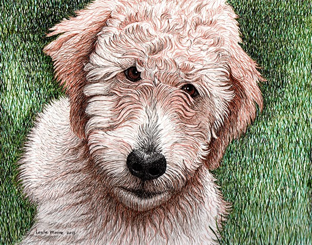 a colored pen and ink drawing of a golden-doodle puppy by Leslie Moore of PenPets