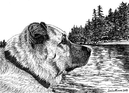 A pen and ink drawing of a chow/shepherd mix dog by Leslie Moore of PenPets.