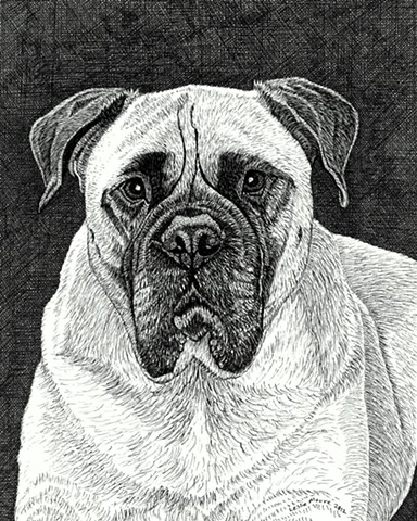 A pen and ink drawing of a Bullmastiff by Leslie Moore of PenPets.