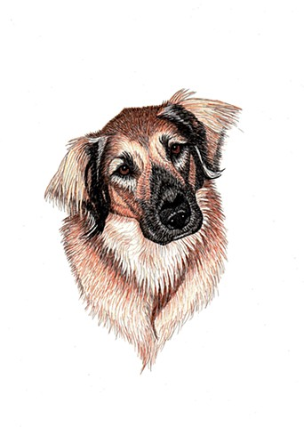 a colored pen and ink drawing of a Leonberger by Leslie Moore of PenPets