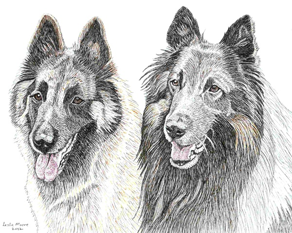A colored pen and ink drawing of two Belgian Tervurens, a male and a female, by Leslie Moore of PenPets.