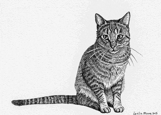 a tiger-striped cat in pen-and-ink by Leslie Moore of PenPets