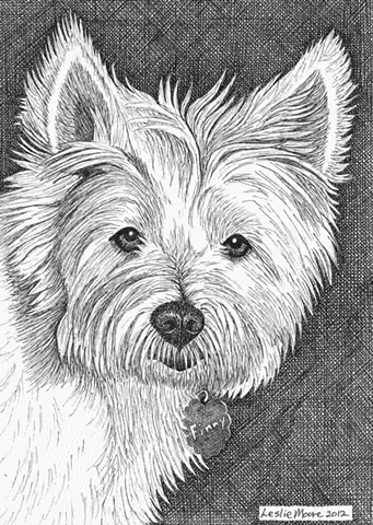 A pen and ink drawing of a West Highland White Terrier by Leslie Moore of PenPets.