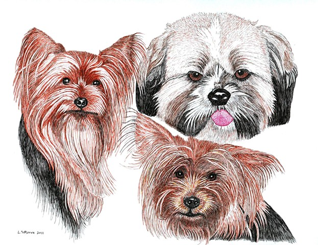 A colored pen and ink drawing of two Yorkshire terriers and a Shih Tzu by Leslie Moore.