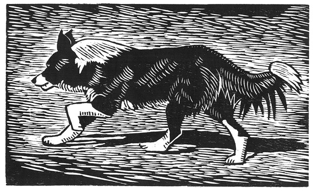 a woodcut of a border collie running by Leslie Moore of PenPets