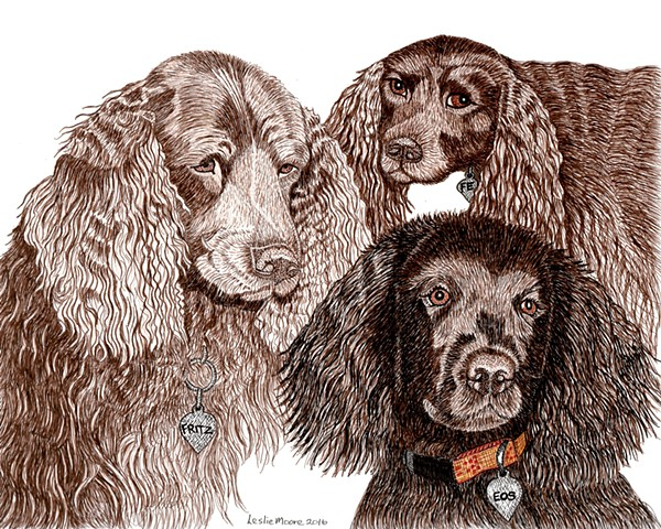 a colored pen and ink drawing of three American Water Spaniels by Leslie Moore of PenPets