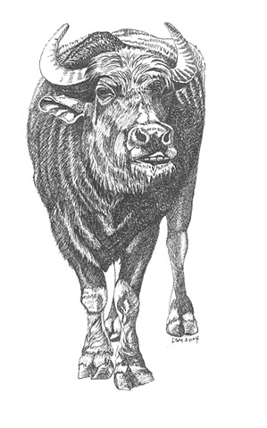 A pen and ink drawing of a water buffalo by Leslie Moore of PenPets.