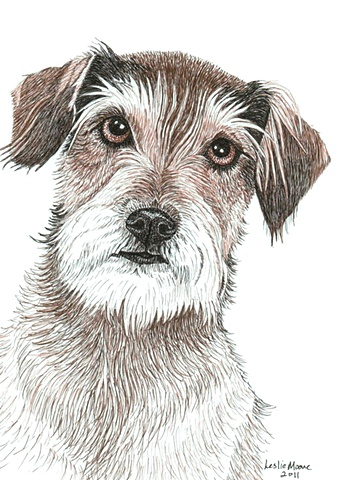 Border Terrier/Schnauzer mix-breed dog, colored pen & ink drawing by Leslie Moore