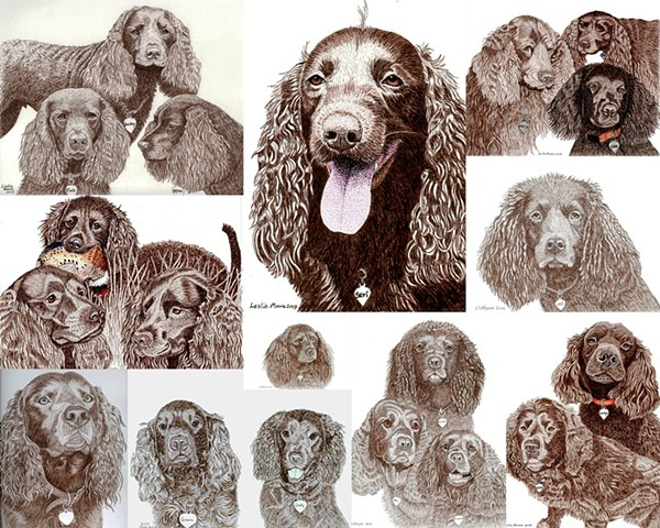 a collage of 20 American Water Spaniels drawn in colored pen-and-ink by Leslie Moore of PenPets.