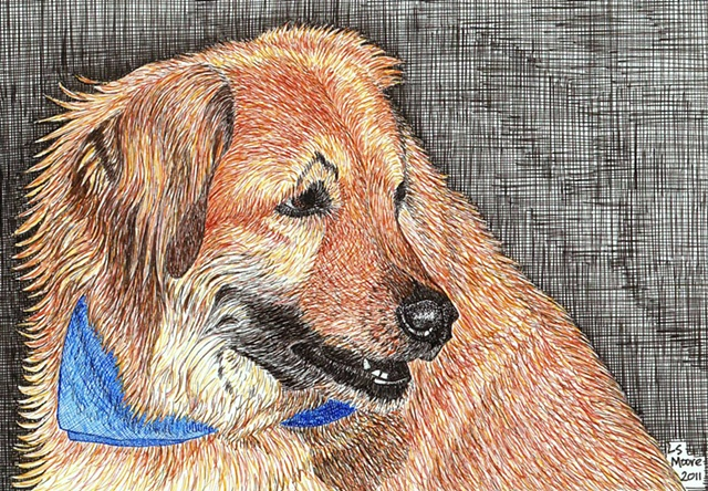 A colored pen and ink drawing of a Golden retriever/shepherd mixed breed dog by Leslie Moore