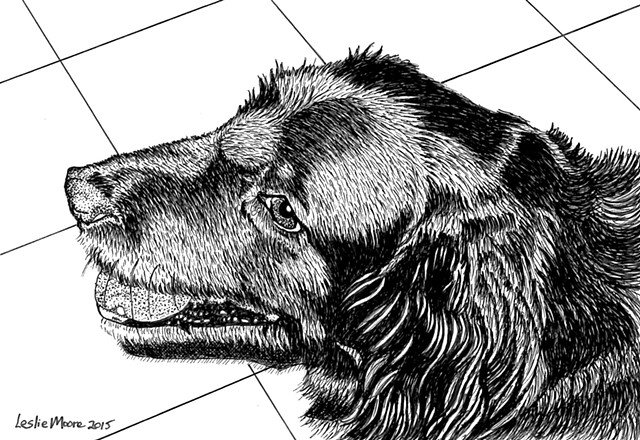 A pen and ink drawing of a mixed-breed retriever by Leslie Moore of PenPets.