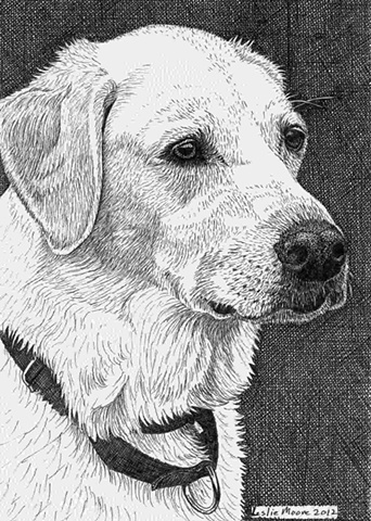 A pen and ink drawing of a yellow Labrador retriever by Leslie Moore of PenPets.