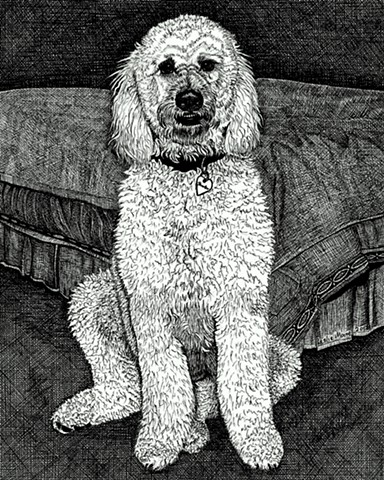 A pen and ink drawing of a Golden Doodle by Leslie Moore of PenPets.