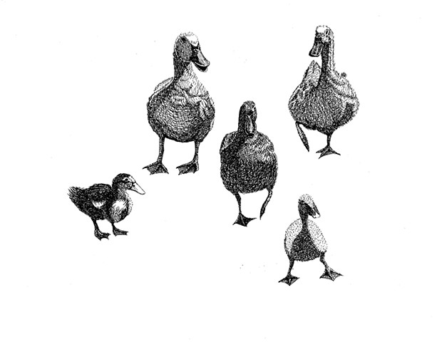 A pen and ink drawing of three ducks and two ducklings by Leslie Moore of PenPets.