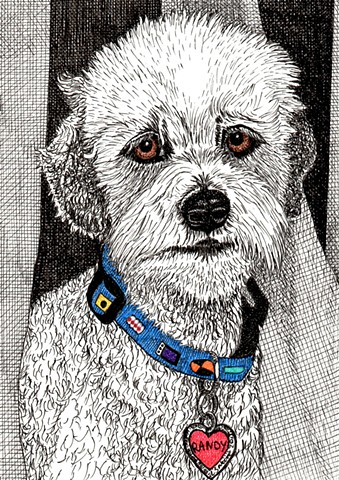 A colored pen and ink drawing of a poodle by Leslie Moore of PenPets.