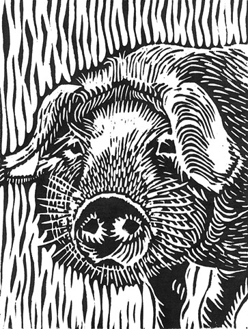 a woodcut of a young pig or shoat by Leslie Moore of PenPets