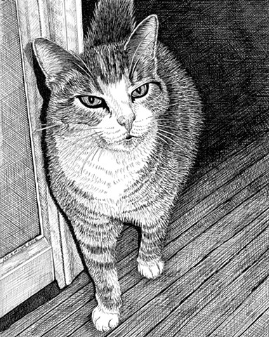 A pen and ink drawing of a tiger-striped grey cat by Leslie Moore of PenPets.