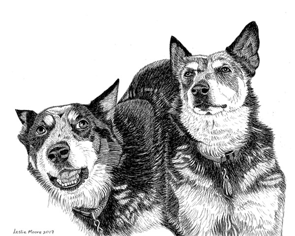 A pen and ink drawing of two Australian Cattle Dogs by Leslie Moore of PenPets.