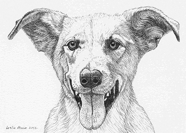 A pen and ink drawing of a flying-eared retriever by Leslie Moore.
