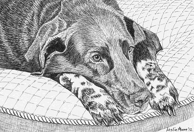 A pen and ink drawing of a speckle-legged Labrador retriever by Leslie Moore.