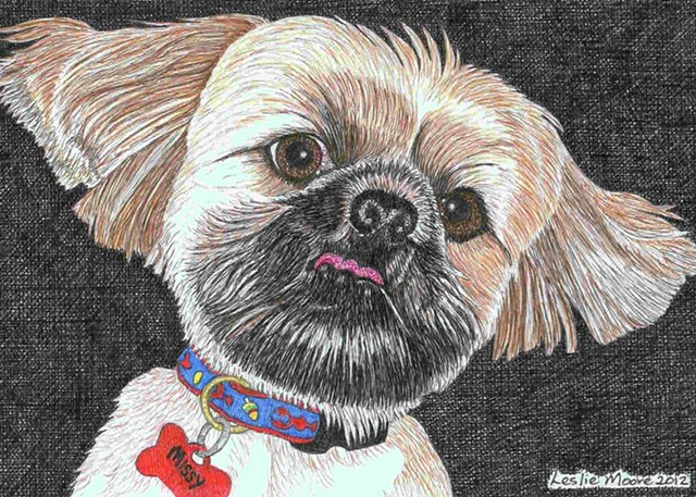 A colored pen-and-ink drawing of a Shih Tzu by Leslie Moore of PenPets.