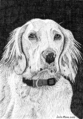 A pen and ink drawing of an English setter by Leslie Moore of PenPets.