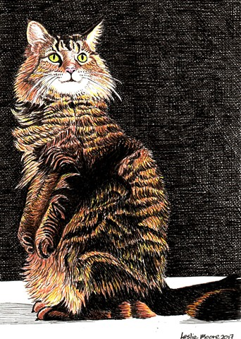 a colored pen and ink drawing of a Maine coon cat by Leslie Moore of PenPets