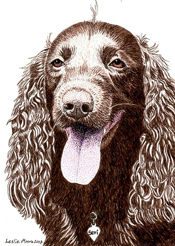 a colored pen and ink drawing of an American Water Spaniel by Leslie Moore of PenPets