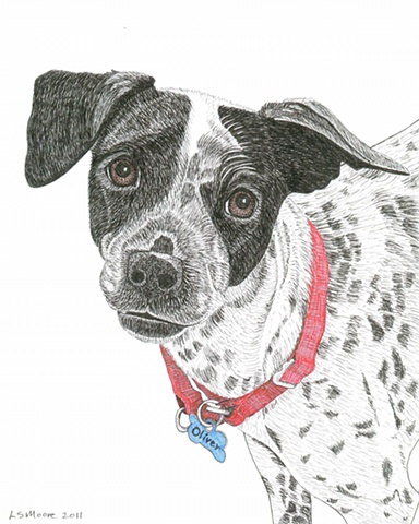 A colored pen and ink drawing of a black and white hound dog mix by Leslie Moore