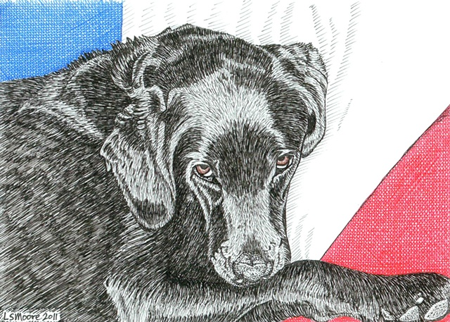 A pen and ink drawing of a black Labrador retriever by Leslie Moore
