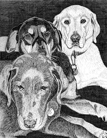 A pen and ink drawing of two Labradors and a mixed breed dog by Leslie Moore of PenPets.