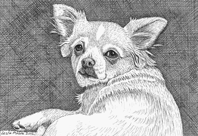 A pen and ink drawing of a Chihuahua by Leslie Moore.