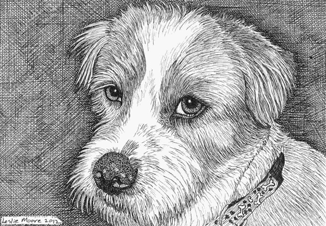 A pen and ink drawing of a mixed-breed terrier by Leslie Moore.