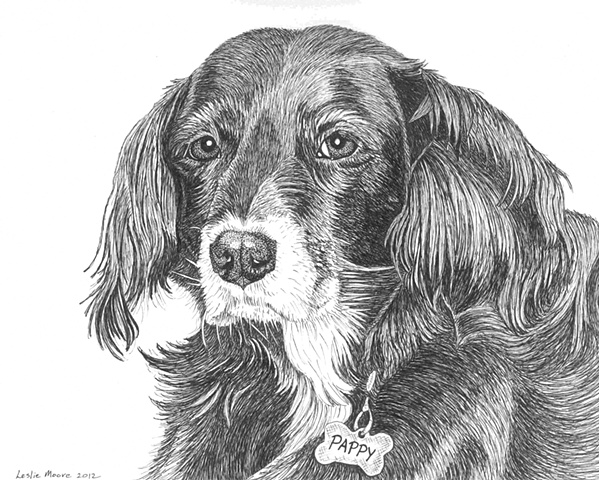 A pen-and-ink drawing of a mixed-breed spaniel by Leslie Moore of PenPets