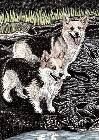 a colored pen and ink and colored pencil drawing of two Pembroke Welsh Corgis on a granite Maine shore line by Leslie Moore of PenPets