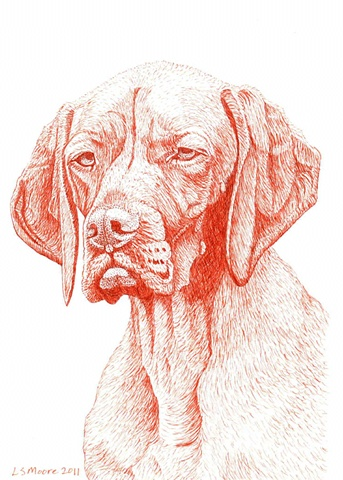 A sepia ink drawing of a Vizsla dog by Leslie Moore